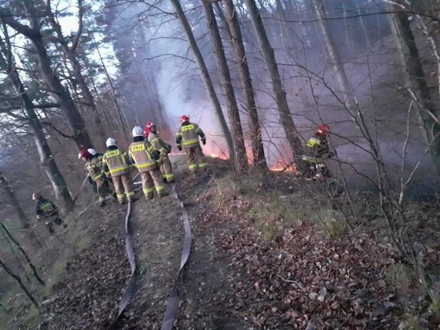 W lesie w Gąbinie w gminie Ustka ogień powstał w kilku miejscach i stanowił ogromne zagrożenie