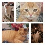 Wyjątkowe zdjęcia kotów naszych Czytelników. Niektóre koty są chyba z gumy