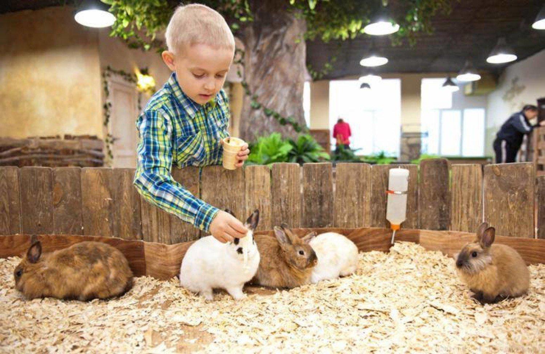 Mini Zoo W Warszawie Tu Dzieci Mogą Z Bliska Nie Tylko Zobaczyć