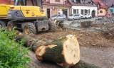 Muszyna. Wycinają drzewa na rynku, ale sadzą też nowe [ZDJĘCIA]