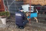 """Służba Więzienna wsparła Schronisko dla Bezdomnych Zwierząt """"Psi Raj"""""""