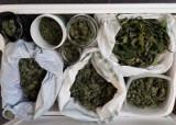 Pacjent z marihuaną w izolatce w Szpitalu Powiatowym w Chrzanowie. Policjanci rozbili rodzinny narkobiznes