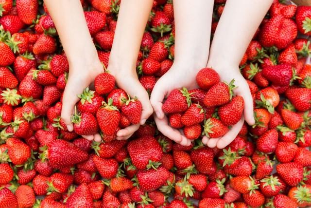 Polski truskawki mają czerwony kolor i stożkowaty kształt, ale to nie jedyne cechy, które pomagają je rozpoznać