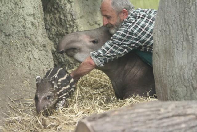 Mała tapirka od poniedziałku (5 października) nosi imię greckiej bogini