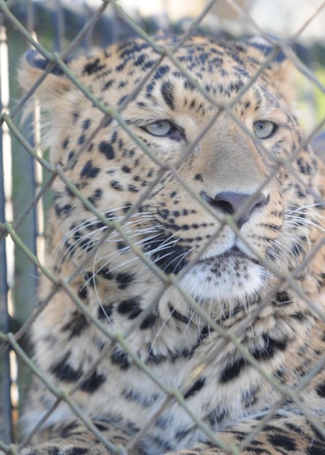 W łódzkim zoo przeprowadzono spis zwierząt