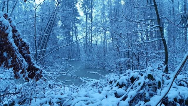 Zima w lasku zachodnim w Słupsku.