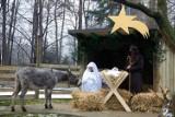 Żywa Szopka po raz pierwszy w krakowskim zoo. Będzie osiołek i dwukolorowe kozy walizerskie