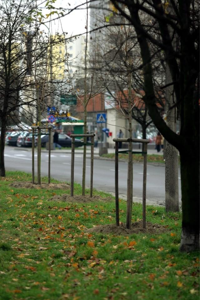 Zieleń w Warszawie. Posadzono więcej drzew, niż usunięto