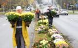 Zielona Góra. Miasto odkupuje od handlarzy tysiące chryzantem. Połowa z nich już ozdobiła pas zieleni przy Al. Konstytucji 3 Maja