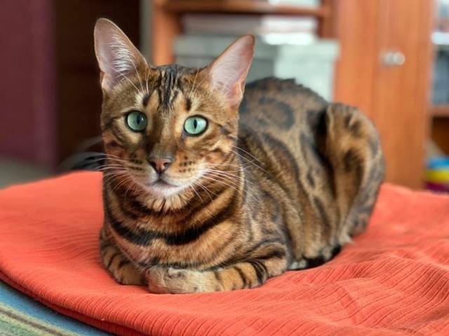Międzynarodowy Dzień Kota - gnieźnieńskie kociaki
