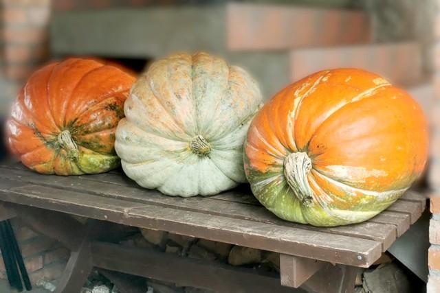 Zobacz najdorodniejsze warzywa w powiecie wolsztyńskim
