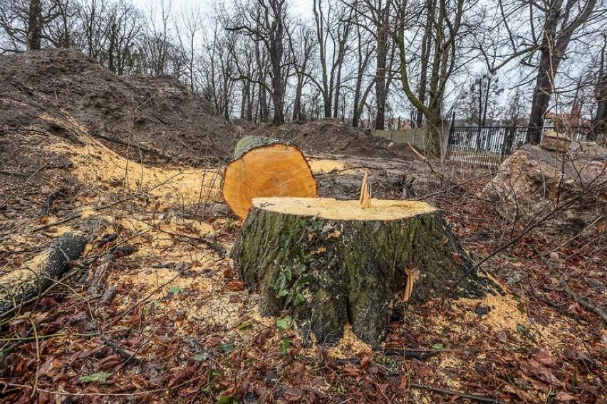 Wycinka drzew w Parku Steffensa. - Uważam, że inwestor...