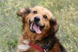 Powiat górowski. Bezdomne psy trafiają do schronisk w Głogowie i Legnicy, gdzie czekają na adopcję. Może znajdzie się chętny? [ZDJĘCIA]