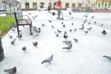Bochnia. Będzie regulamin korzystania z odnowionego Rynku: zakaz kąpieli w fontannie, karmienia gołębi i jazdy m.in. na rolkach