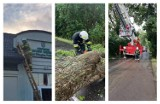 Ulewy i wichury w powiecie gdańskim. Powalone drzewa, zabezpieczenie dachu - strażacy mieli co robić |ZDJĘCIA