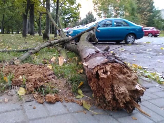 Silny wiatr na wałbrzyskim Podzamczu łamał drzewa, wywracał reklamy.