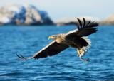 Najczęściej spotykane gatunki ptaków na Lubelszczyźnie. Znasz je?