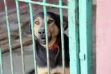 Zostań wolontariuszem w Schronisku dla Bezdomnych Zwierząt w Legnicy. Samotne psiaki i kociaki potrzebują opieki