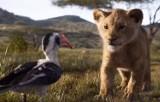 """Nowy """"Król Lew"""" premierowo w kinie Komeda już od 19 lipca! Ruszyła przedsprzedaż biletów"""