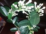 Jaki kwiatek dla Ewy z okazji jej  święta? Piękny i trwały jak uczucie, którym ją darzymy. Może doniczkowy