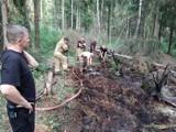 Pożar torfowiska w Otominie gm. Kolbudy. 6 zastępów walczyło z trudnym do ugaszenia ogniem |ZDJĘCIA