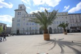Kiedy na rynku w Chorzowie staną palmy? Powrót Hildy, Trudy i Bercika