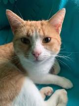 OSP Sławsko organizuje zbiórkę dla podopiecznych Stowarzyszenia My 3 Koty i Psy ZDJĘCIA