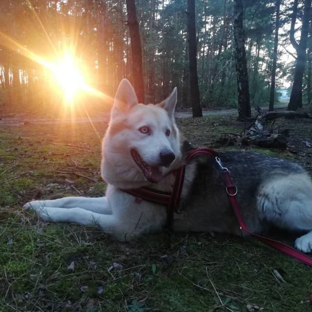 Światowy Dzień Zwierząt. Oto najpiękniejsze zwierzaki czytelników portalu Kalisz.NaszeMiasto.pl