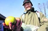 Uwaga drożyzna! Ceny polskich warzyw i owoców biją rekordy [WIDEO]