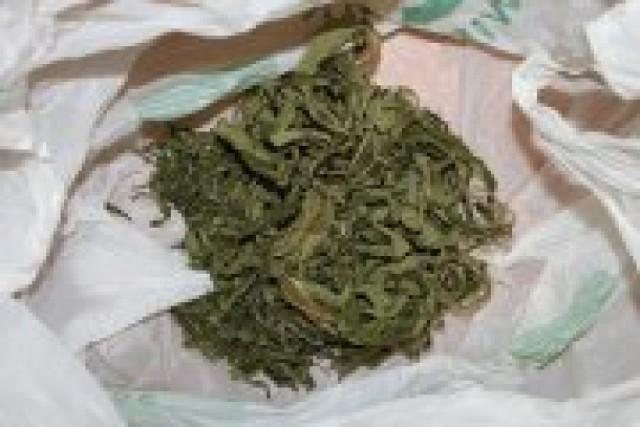 Zabezpieczona marihuana