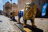 Lwy i tygrys od poniedziałku na wybiegu w opolskim zoo