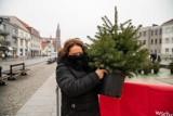Białystok. Akcja Choinka. Białostoczanie za darmo zamieniali sztuczne drzewka na żywe choinki (zdjęcia)