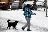 Pada śnieg,  pada śnieg... Kto i kiedy musi odśnieżać chodniki? Przypominają o tym strażnicy miejscy z Grudziądza