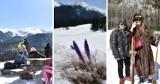 Tatry. Kalatówki w lany poniedziałek. Piękne słońce, przebijające się spod śniegu krokusy, a także spragnieni Wielkanocnego Jaja [ZDJĘCIA]