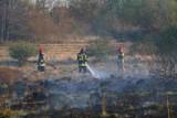 Płonęły trawy w gminach Miłkowice, Kunice i Legnickie Pole [ZDJĘCIA]