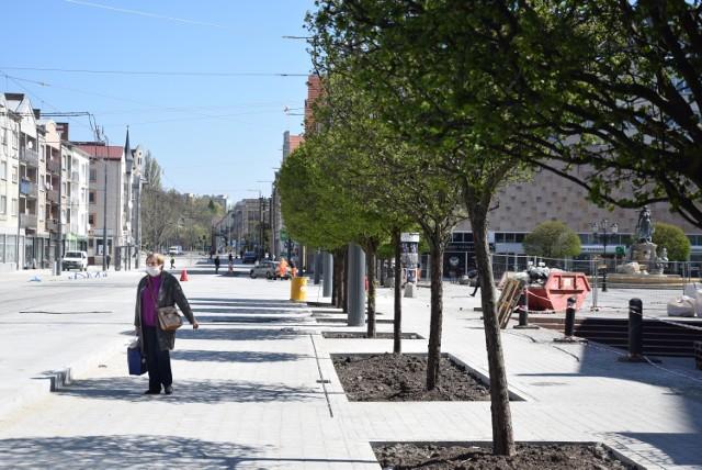 W trakcie przebudowy ul. Sikorskiego w części deptakowej nie wycięto ani jednego drzewa.