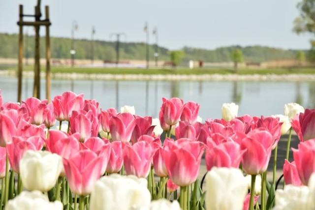 Prawdziwa wiosna w Wolsztynie