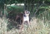 Pruszcz Gdański: Poszukują sprawcy porzucenia psa, przywiązanego głęboko w krzakach w okolicy nowego wiaduktu [ZDJĘCIA]