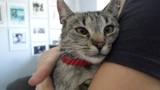 Zaadoptuj kota z lubelskiego schroniska