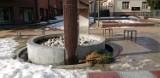 Pruszcz Gdański. Topniejący śnieg odsłania dziury, śmieci, puste butelki na ulicach i chodnikach |ZDJĘCIA