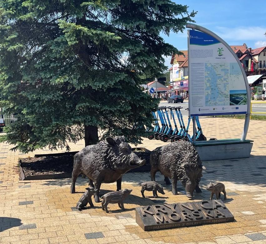 Krynica Morska: w centrum miasta pojawiło się stado przyjaznych dzików
