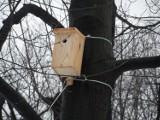 Budki lęgowe Chorzów. 600 budek zawisło na drzewach w parkach