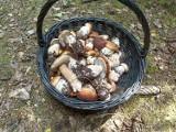 Mykolog wyjaśnia, dlaczego grzyby są robaczywe! Kiedy zbierać grzyby żeby nie były robaczywe? Jak unikać robaczywych grzybów?