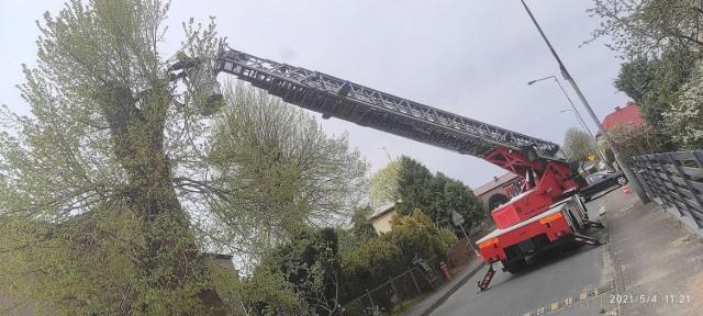 W dniu och święta o strażakach ze Skwierzyny nie zapomniały przedszkolaki, ale także dowcipnisie. O silnym wietrze nie wspominając.
