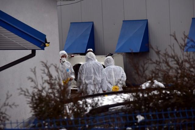 Wykrycie zjadliwego ogniska ptasiej grypy w powiecie gorlickim (na zdjęciach) spowodowało, że wsie z gminy Skołyszyn zostały objęte strefa zagrożenia.