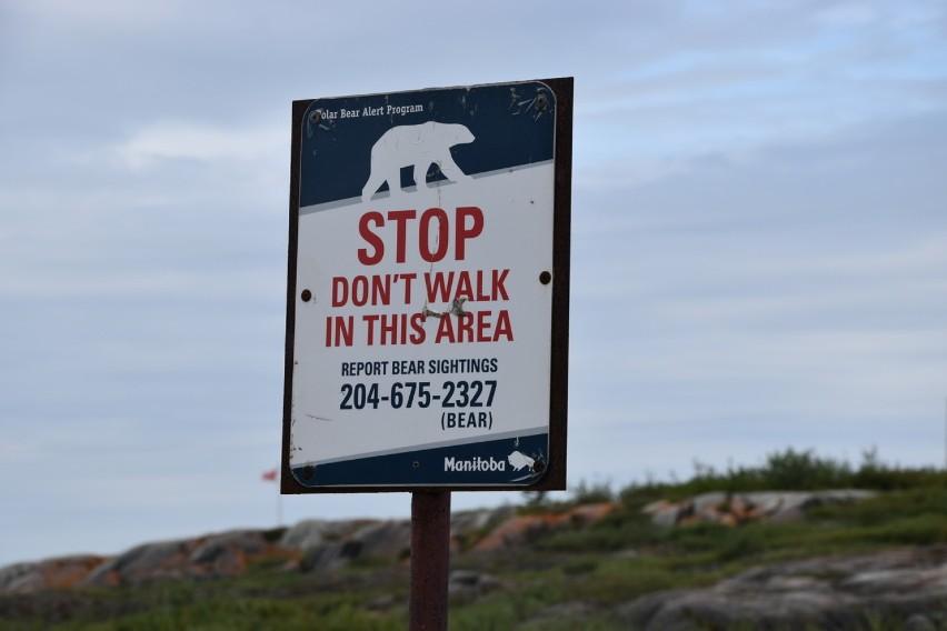 B&B w podróży przez Ameryki: niedźwiedzie polarne i...