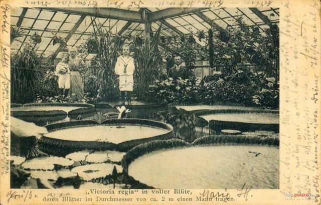 Ogród Botaniczny za Niemca. Wrocław przed II wojną światową