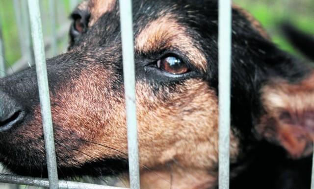 Proceder zarabiania na cierpieniu bezdomnych zwierząt kwitnie i nic nie wskazuje na to, że szybko odmieni się psi i koci los