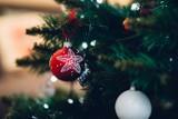 Szansa na drugie życie dla choinek, mieszkańców Świdnika! Sprawdź co możesz zrobić ze swoim bożonarodzeniowym drzewkiem?
