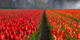 Najbardziej trujące rośliny w Polsce! Niebezpieczne i popularne kwiaty w domach i na działkach 13.09.2021